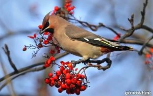 Фотографии птиц восточной сибири с названиями 018