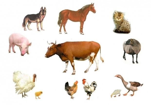 Фото домашних животных и диких животных 020