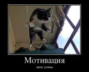 Фото приколы про кошек с надписями 020