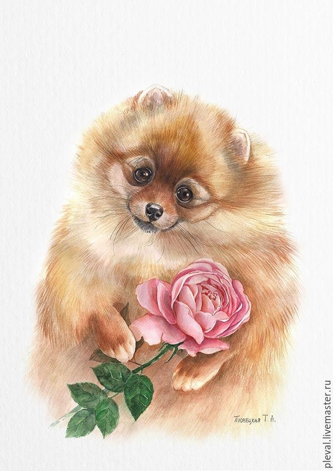 Картинки открытки, открытки с нарисованными собачками