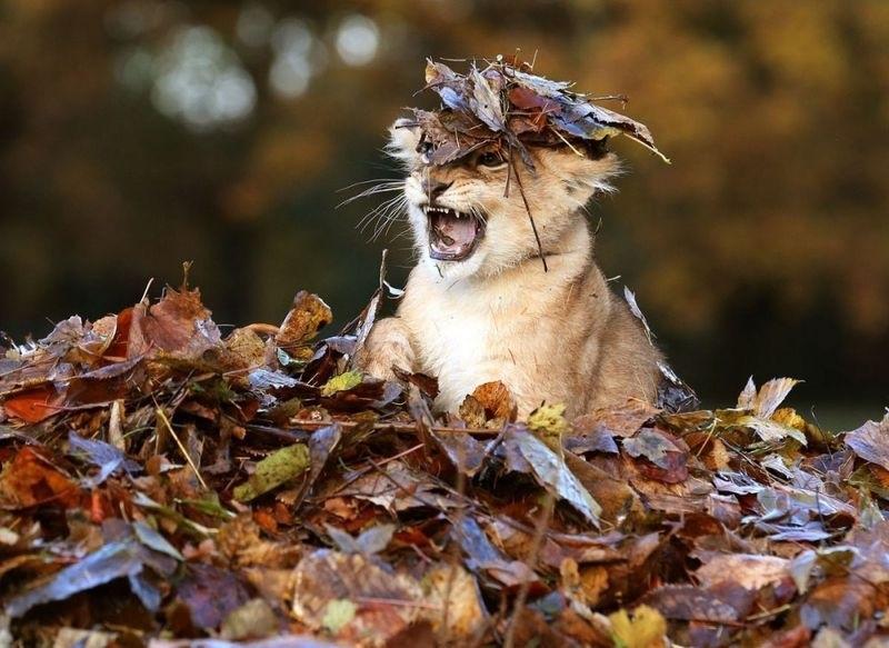 картинки осень в лесу с животными 010