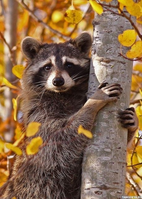 картинки осень в лесу с животными 011