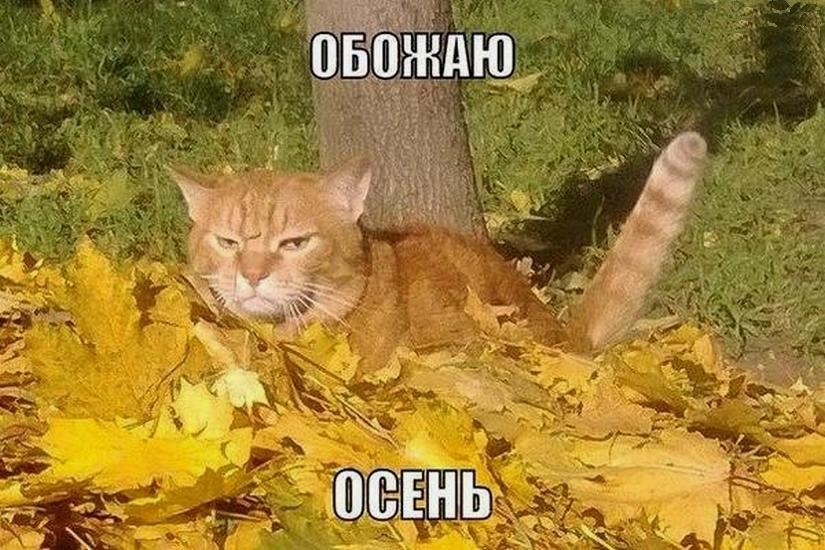 Прикольные осенние картинки с надписями ржачные до слез русские, сделать картинку