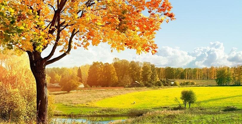 красивые картинки про осень с детьми 002