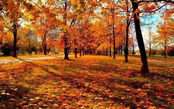 красивые картинки про осень с детьми 005