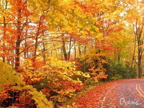 красивые картинки про осень с детьми 009