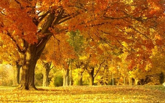 красивые картинки про осень с детьми 011