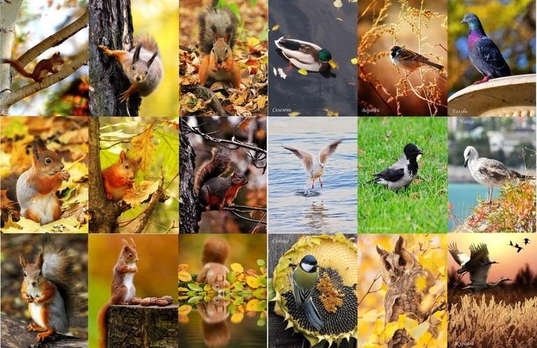 красивые картинки про осень с животными 001
