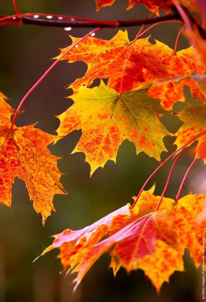 красивые картинки про осень с животными 002
