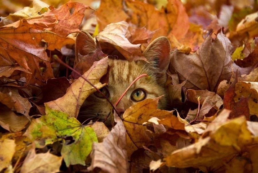 красивые картинки про осень с животными 004