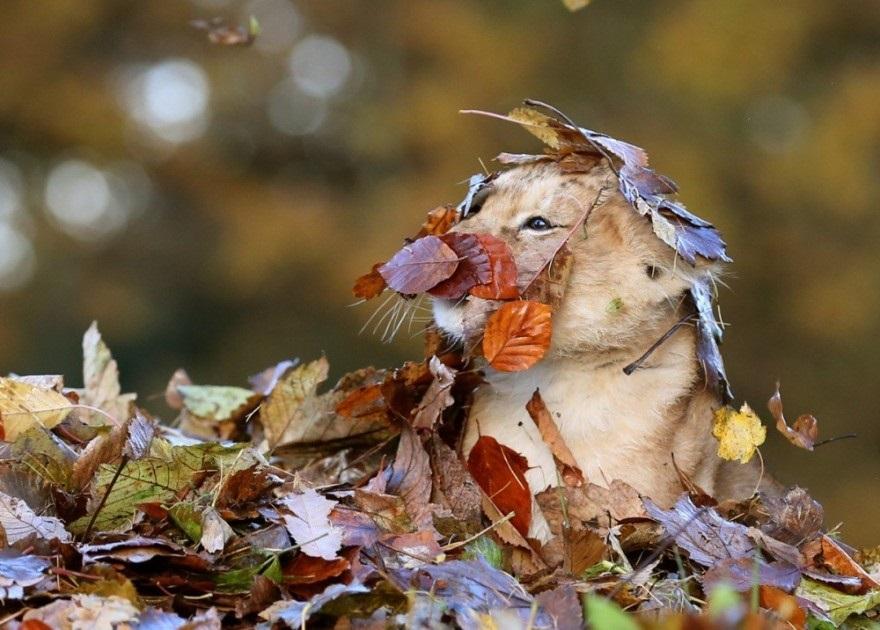 красивые картинки про осень с животными 005