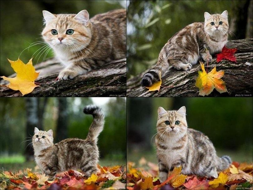 красивые картинки про осень с животными 006