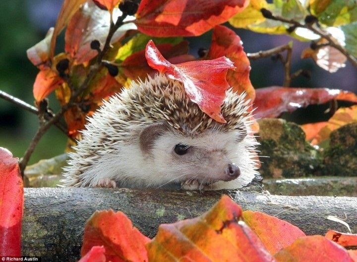 красивые картинки про осень с животными 008
