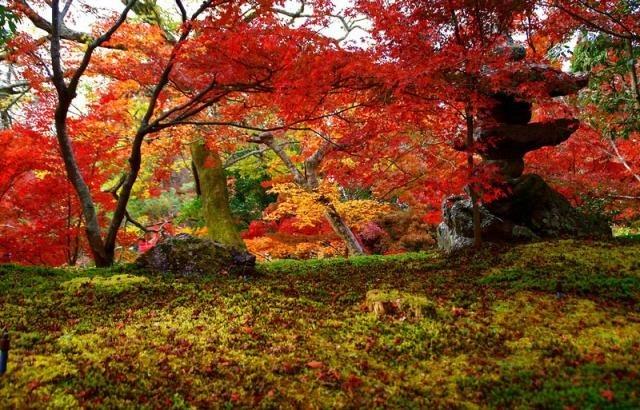 красивые картинки про осень с животными 009