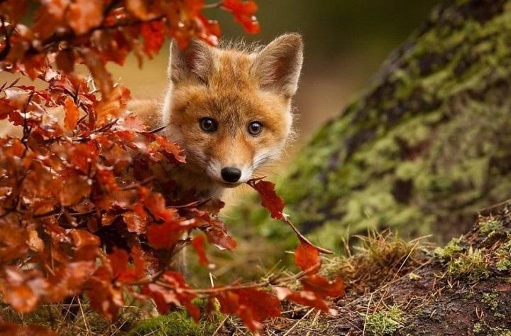 красивые картинки про осень с животными 010