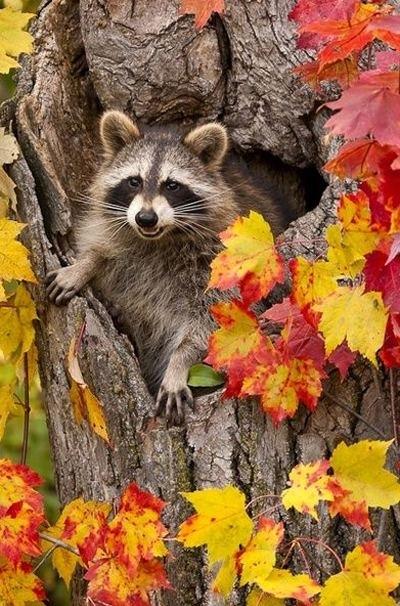 красивые картинки про осень с животными 012