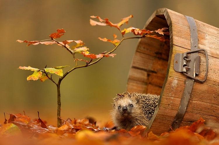красивые картинки про осень с животными 013