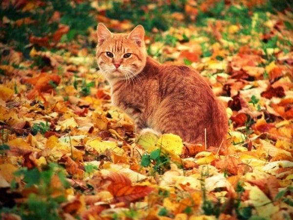 красивые картинки про осень с животными 014