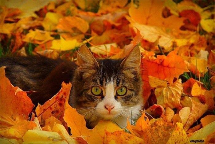 красивые картинки про осень с животными 015