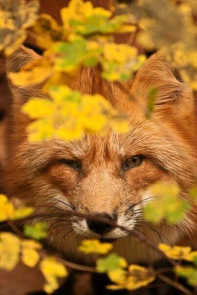 красивые картинки про осень с животными 018