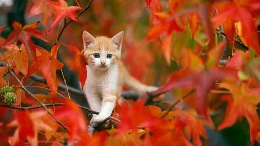 красивые картинки про осень с животными 019