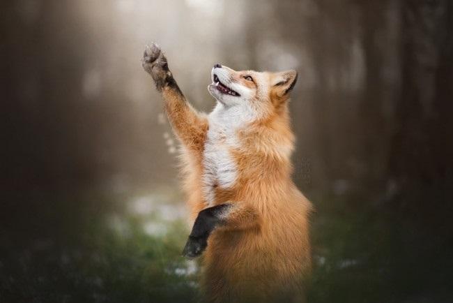 красивые картинки про осень с животными 020