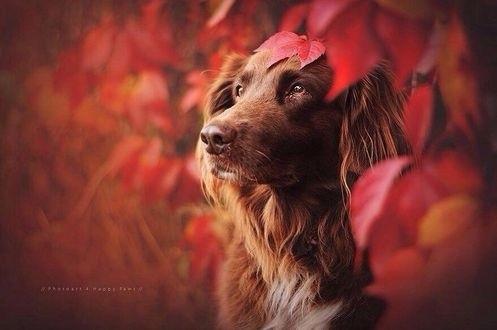 красивые картинки про осень с животными 021