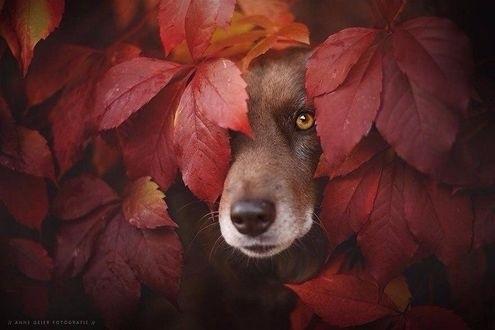 красивые картинки про осень с животными 022