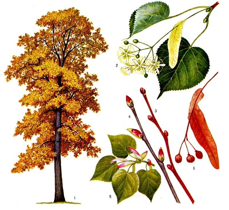 лесные деревья осенью картинки для детей 001