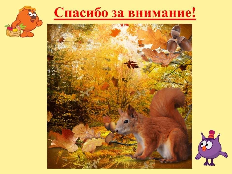лесные деревья осенью картинки для детей 006