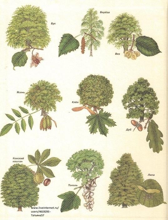 лесные деревья осенью картинки для детей 007