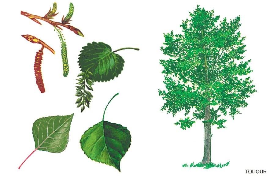 лесные деревья осенью картинки для детей 011