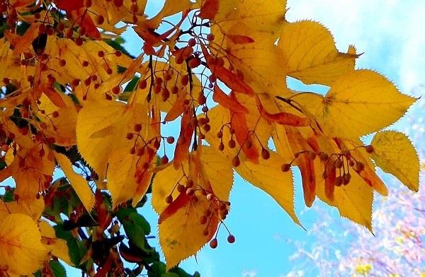 лесные деревья осенью картинки для детей 012