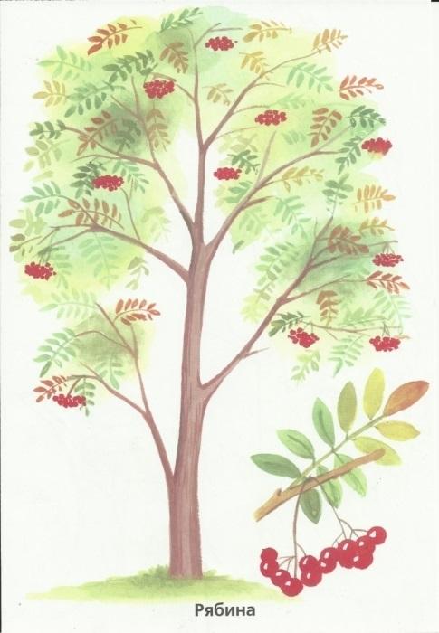 Картинка рябина осенью для детей
