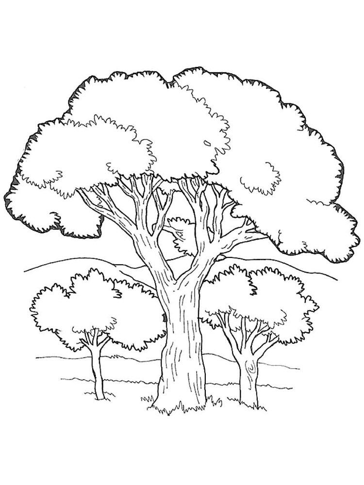 лесные деревья осенью картинки для детей 014