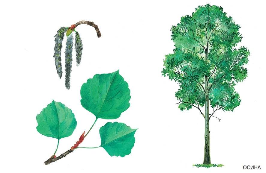 лесные деревья осенью картинки для детей 015