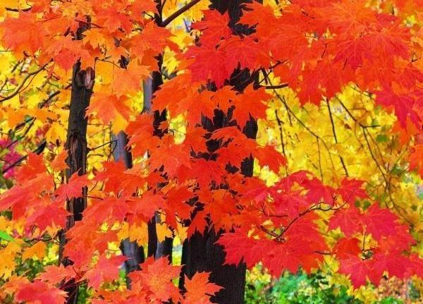 лесные деревья осенью картинки для детей 016