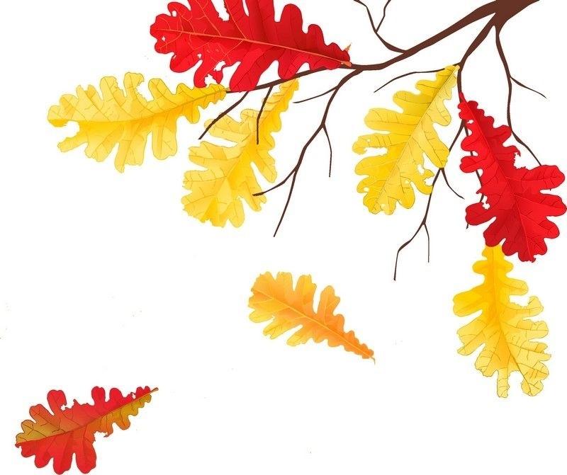 лесные деревья осенью картинки для детей 019