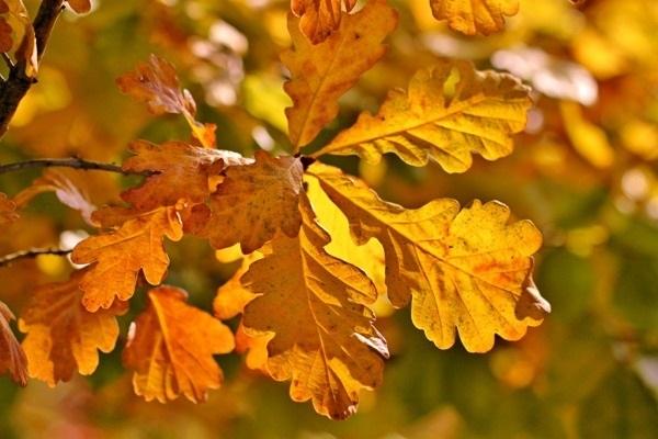лесные деревья осенью картинки для детей 023