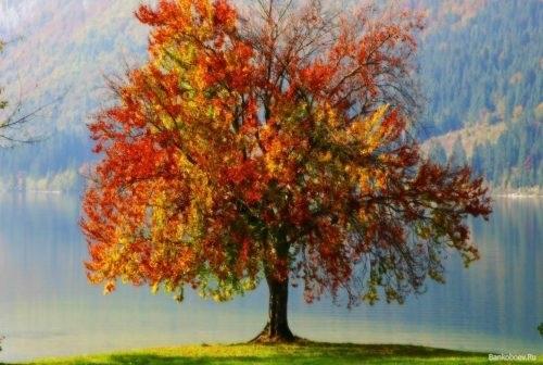 лесные деревья осенью картинки для детей 025