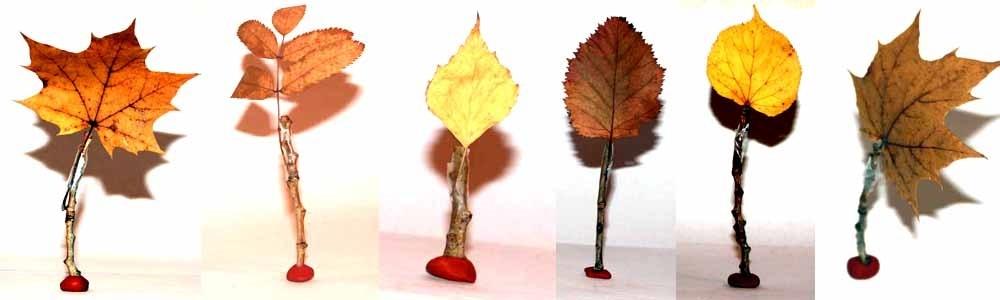 лесные деревья осенью картинки для детей 026