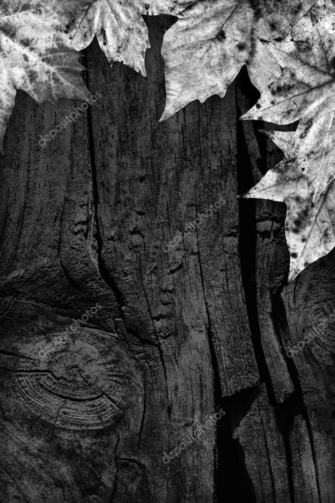 черно белые картинки на тему осень 002