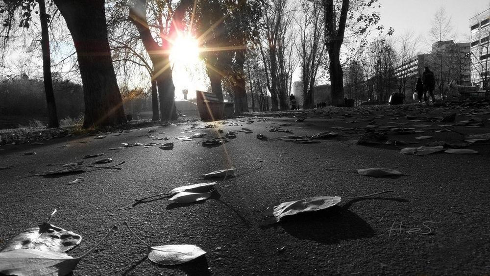 черно белые картинки на тему осень 003
