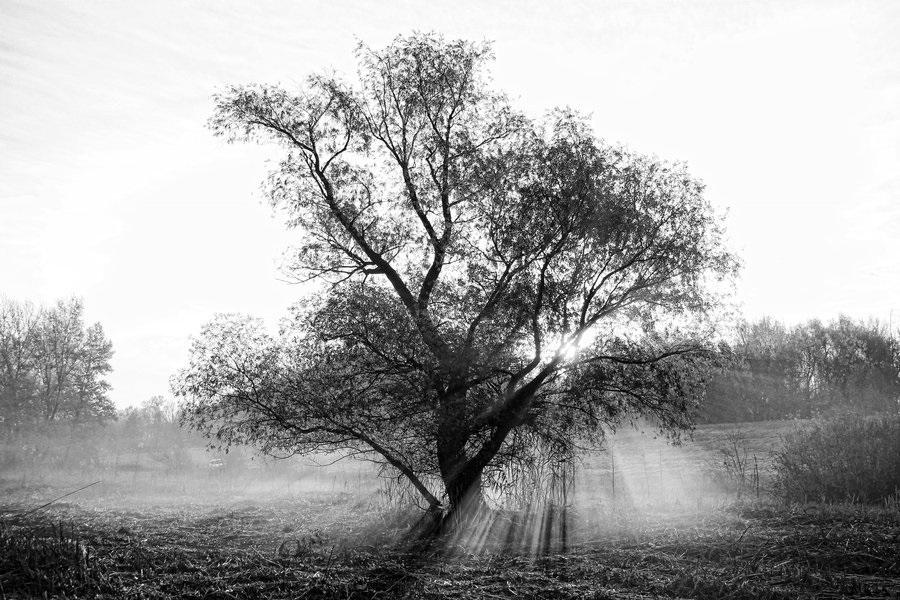 черно белые картинки на тему осень 004