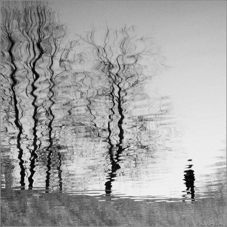 черно белые картинки на тему осень 005