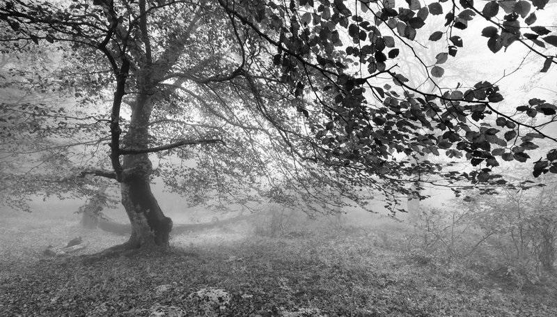 черно белые картинки на тему осень 007