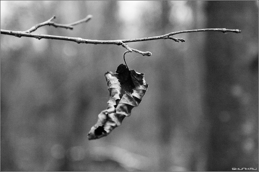 черно белые картинки на тему осень 008