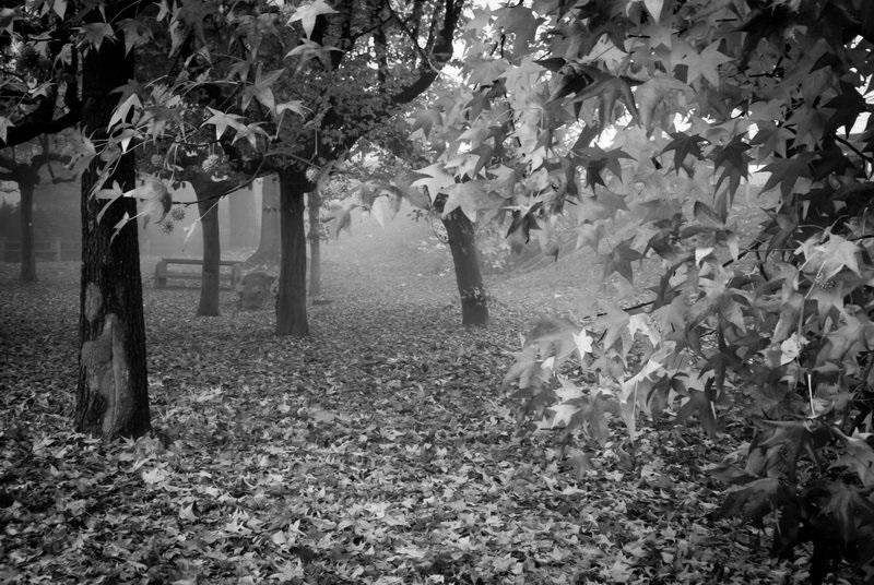 черно белые картинки на тему осень 009
