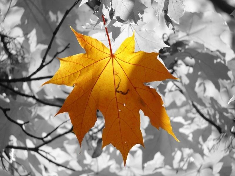 черно белые картинки на тему осень 013