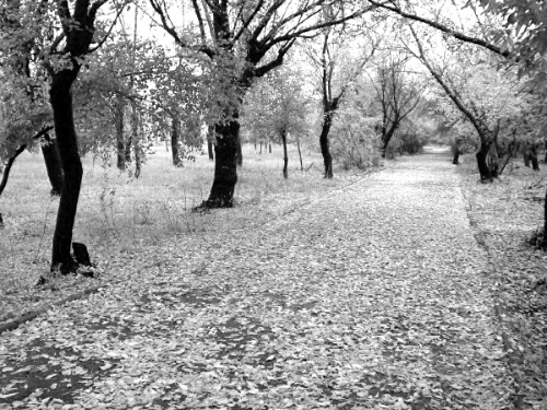 черно белые картинки на тему осень 014